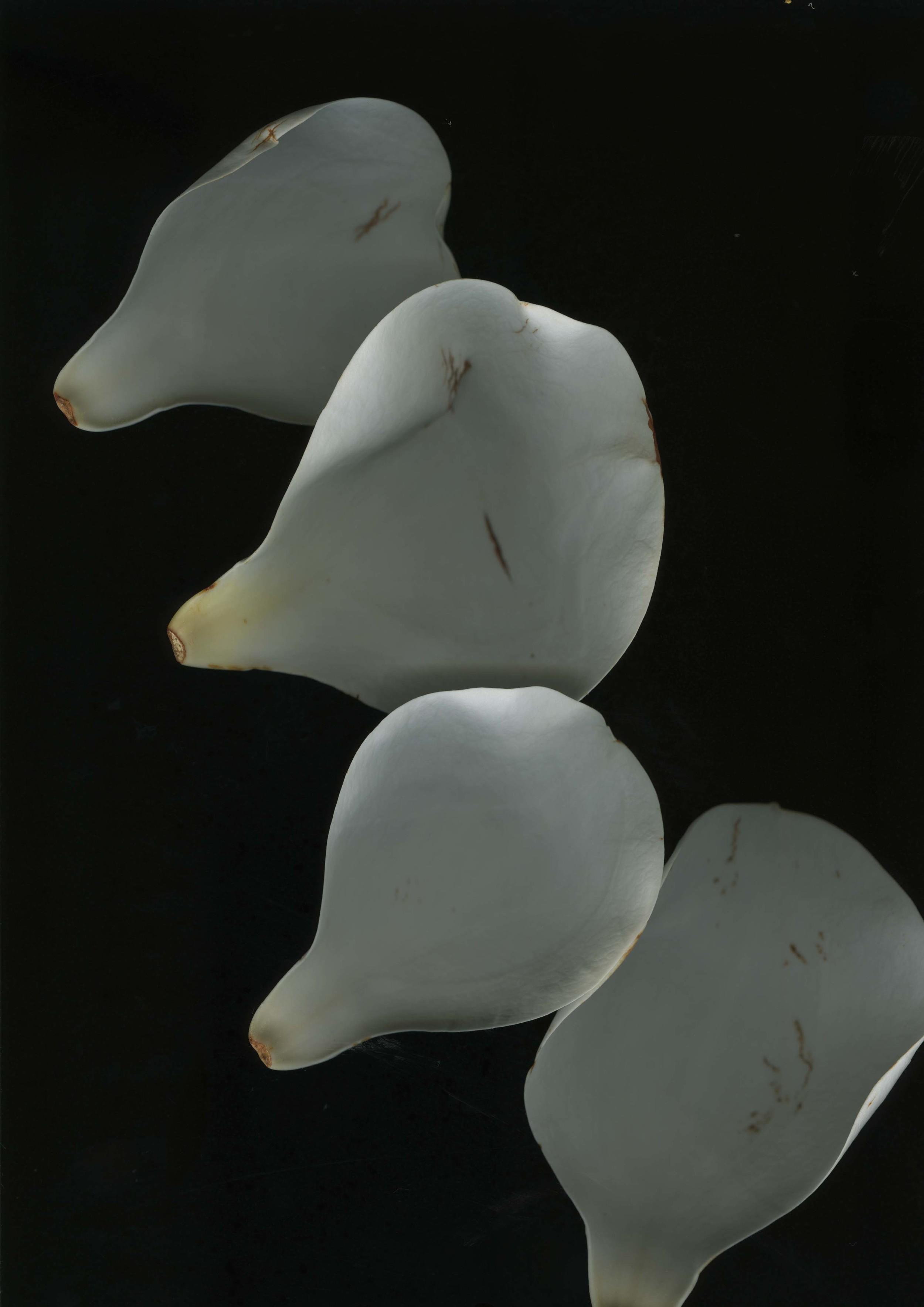 magnolialeafs_3.jpg
