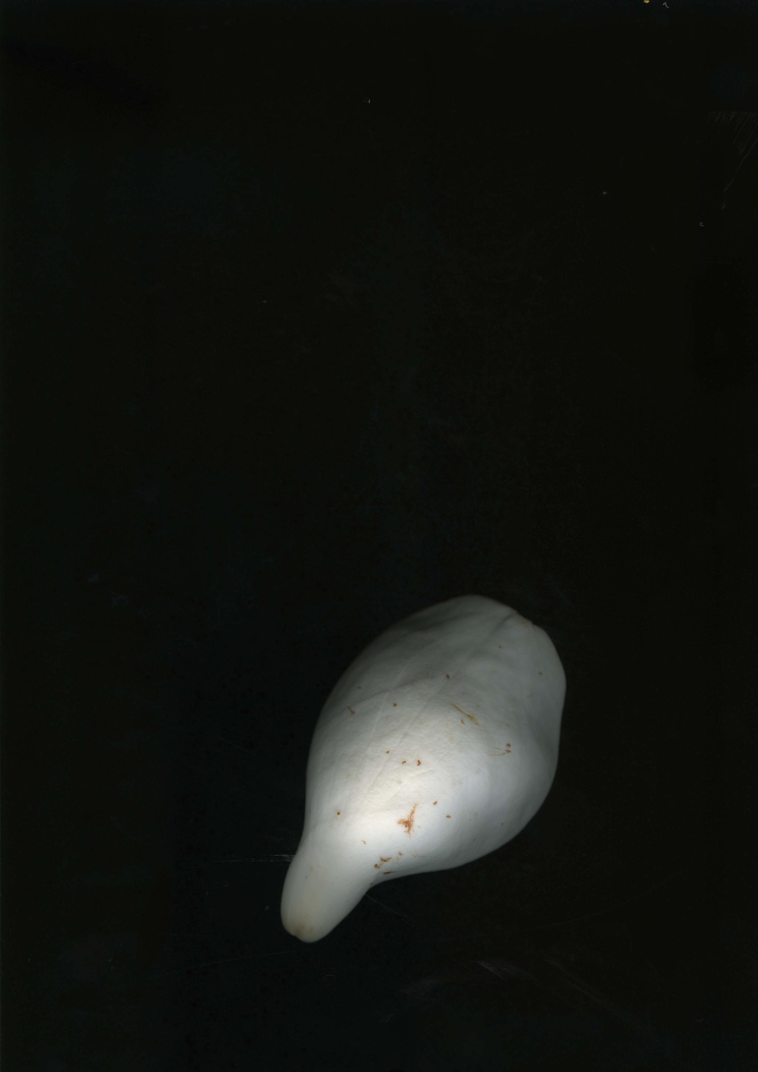 magnolialeafs_2.jpg