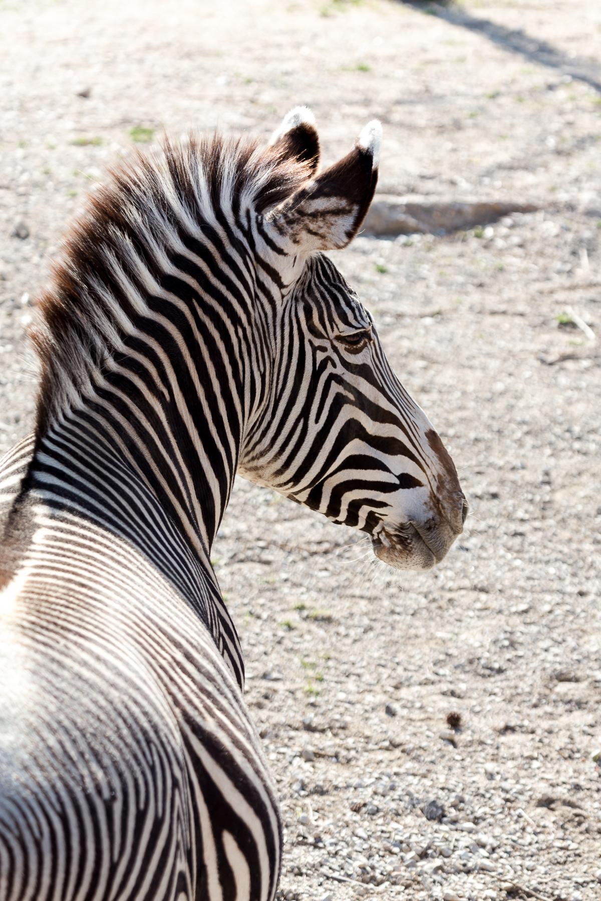 StLouis-Zoo-040316-201.jpg