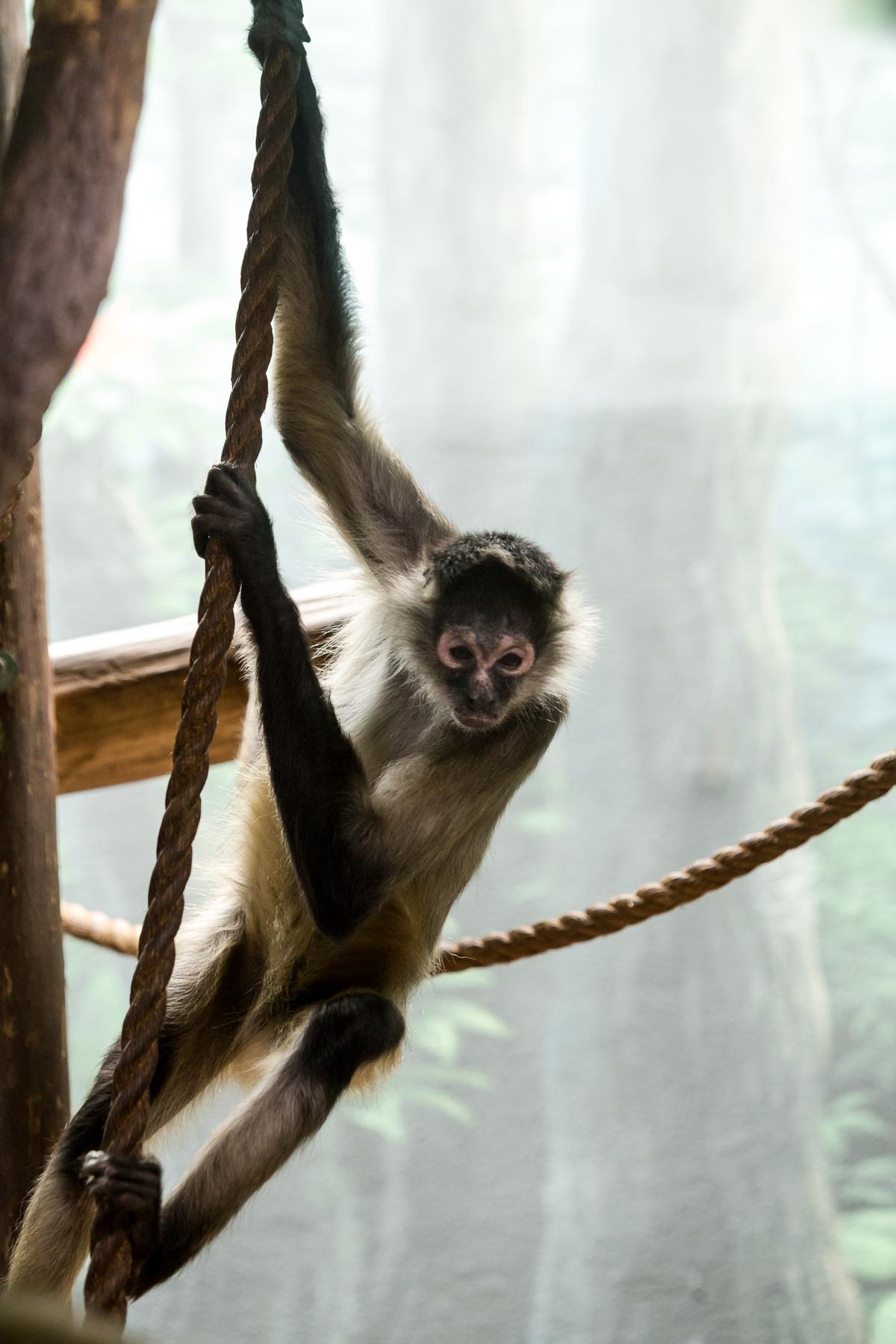 StLouis-Zoo-040316-249.jpg
