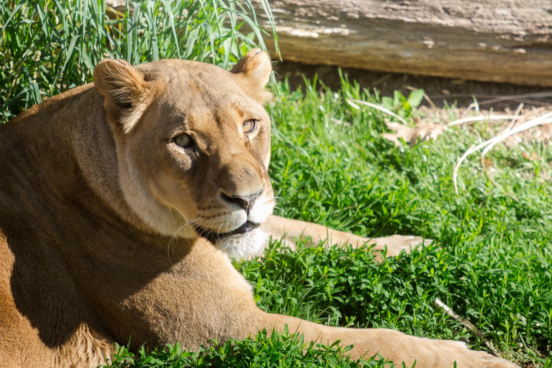 StLouis-Zoo-TB-042316-157.jpg
