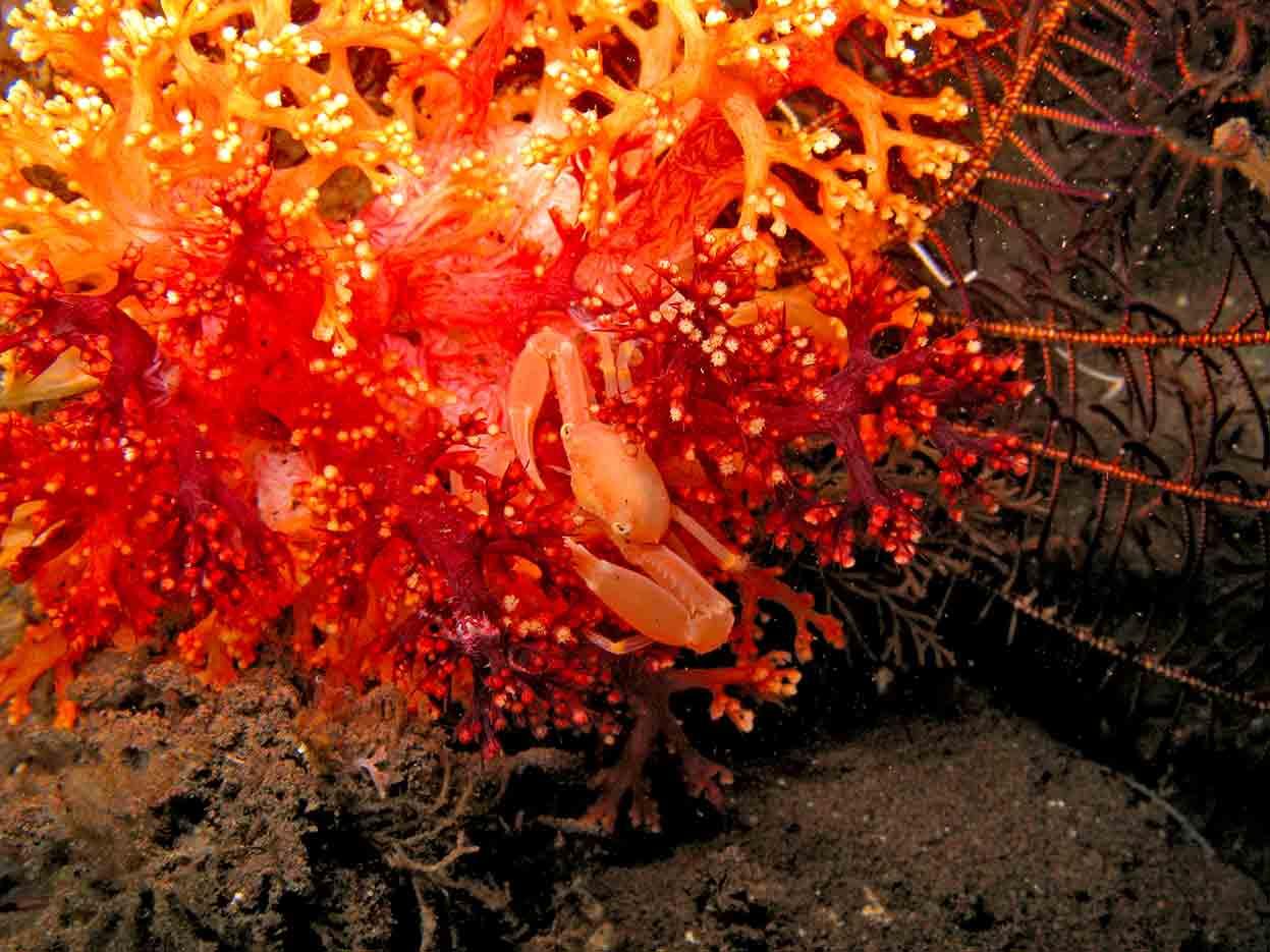Gili-Trawangan-Lombok-Activities-Activity-Scuba-Scubadive-Scubadiving-Dive-Diving-08.jpg