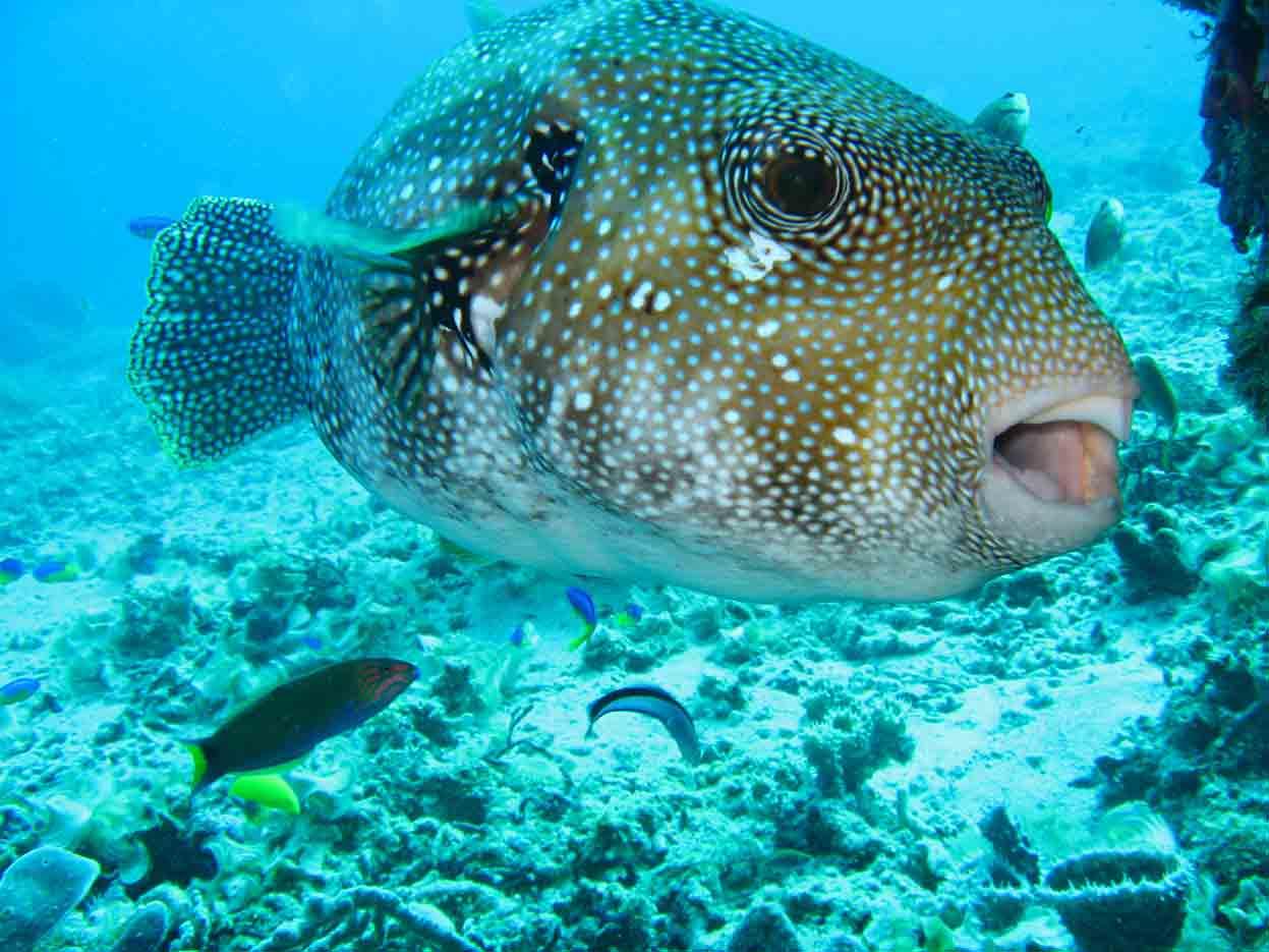 Gili-Trawangan-Lombok-Activities-Activity-Scuba-Scubadive-Scubadiving-Dive-Diving-11.jpg