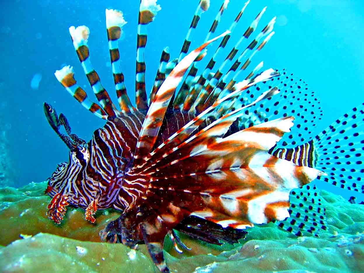 Gili-Trawangan-Lombok-Activities-Activity-Scuba-Scubadive-Scubadiving-Dive-Diving-10.jpg