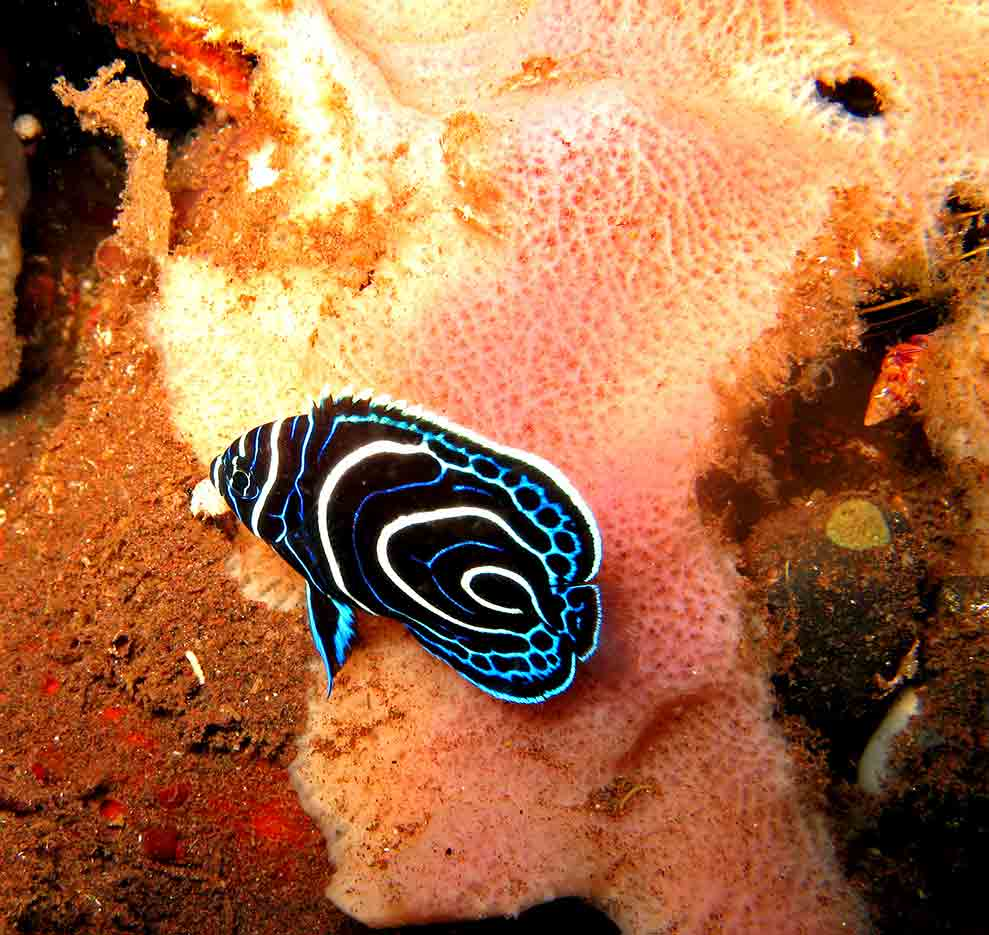 Gili-Trawangan-Lombok-Activities-Activity-Scuba-Scubadive-Scubadiving-Dive-Diving-13.jpg