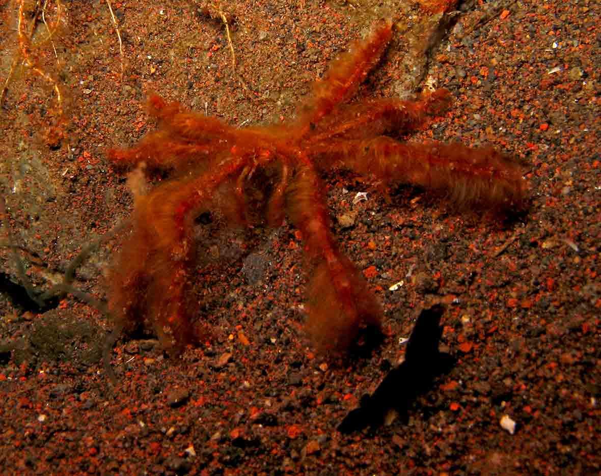 Gili-Trawangan-Lombok-Activities-Activity-Scuba-Scubadive-Scubadiving-Dive-Diving-15.jpg