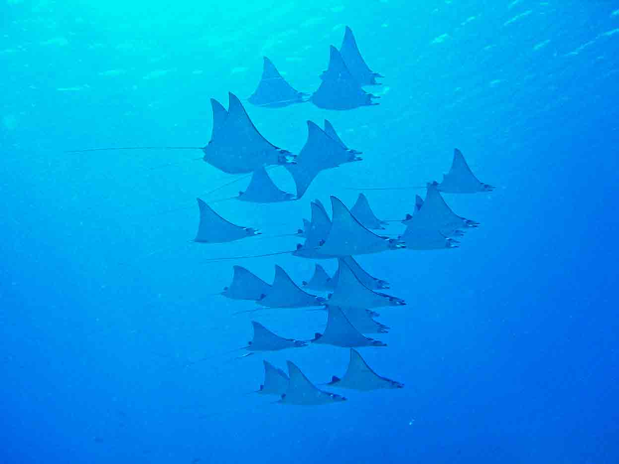 Gili-Trawangan-Lombok-Activities-Activity-Scuba-Scubadive-Scubadiving-Dive-Diving-19.jpg