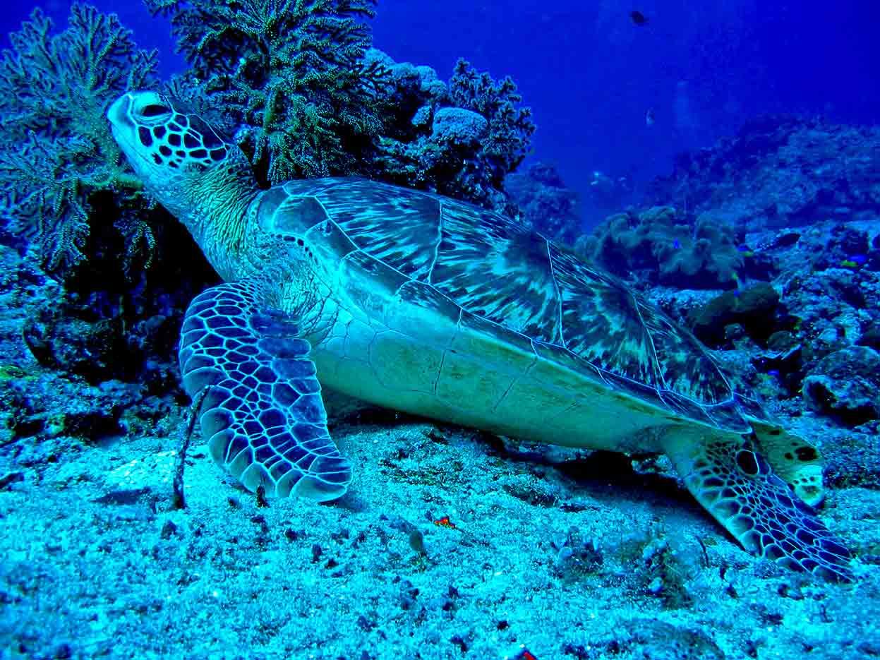 Gili-Trawangan-Lombok-Activities-Activity-Scuba-Scubadive-Scubadiving-Dive-Diving-18.jpg