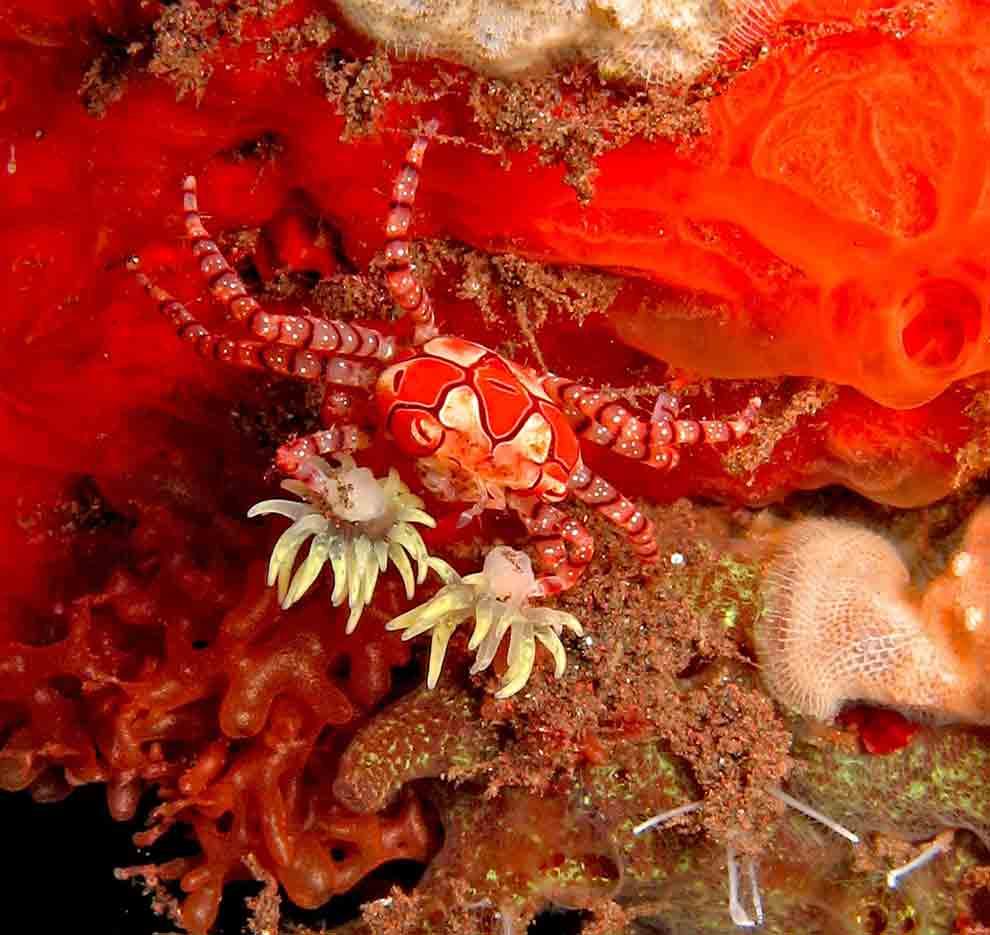 Gili-Trawangan-Lombok-Activities-Activity-Scuba-Scubadive-Scubadiving-Dive-Diving-20.jpg