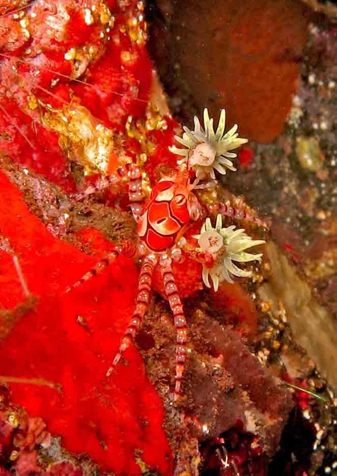 Gili-Trawangan-Lombok-Activities-Activity-Scuba-Scubadive-Scubadiving-Dive-Diving-21.jpg