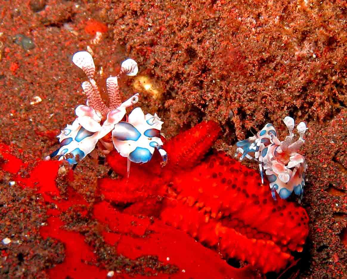 Gili-Trawangan-Lombok-Activities-Activity-Scuba-Scubadive-Scubadiving-Dive-Diving-23.jpg