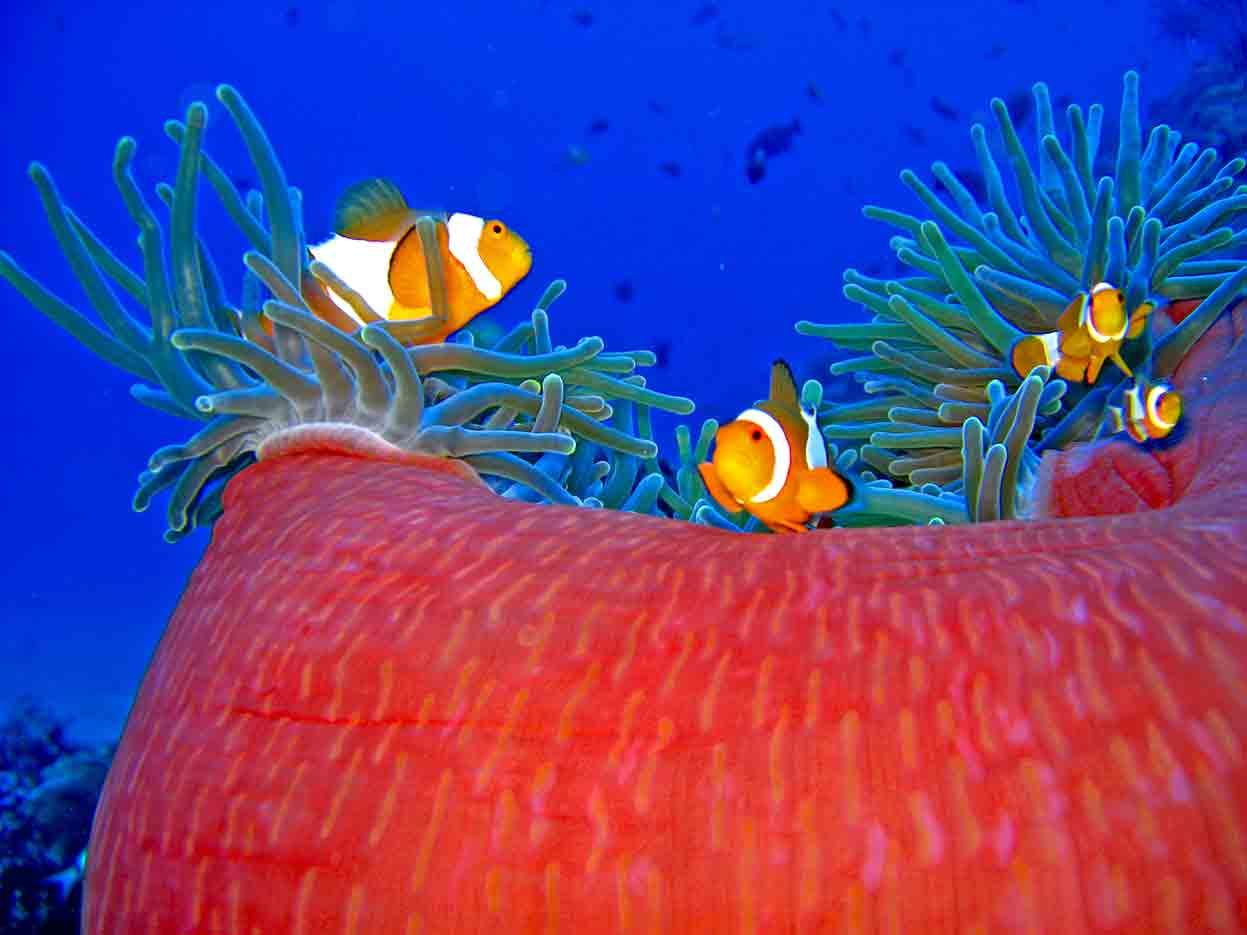 Gili-Trawangan-Lombok-Activities-Activity-Scuba-Scubadive-Scubadiving-Dive-Diving-28.jpg