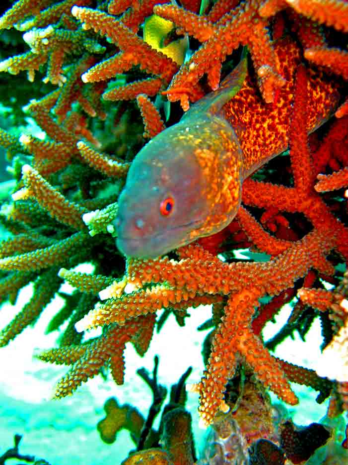 Gili-Trawangan-Lombok-Activities-Activity-Scuba-Scubadive-Scubadiving-Dive-Diving-29.jpg