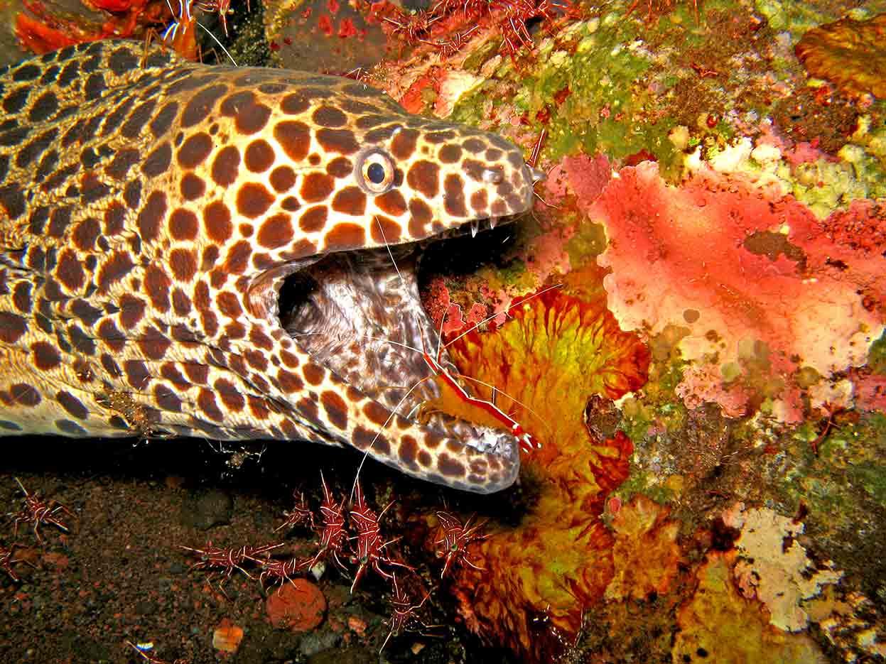 Gili-Trawangan-Lombok-Activities-Activity-Scuba-Scubadive-Scubadiving-Dive-Diving-31.jpg