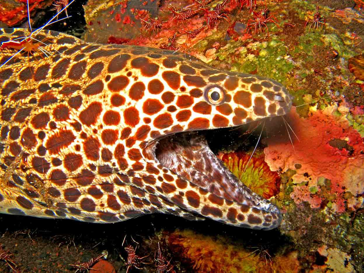 Gili-Trawangan-Lombok-Activities-Activity-Scuba-Scubadive-Scubadiving-Dive-Diving-32.jpg