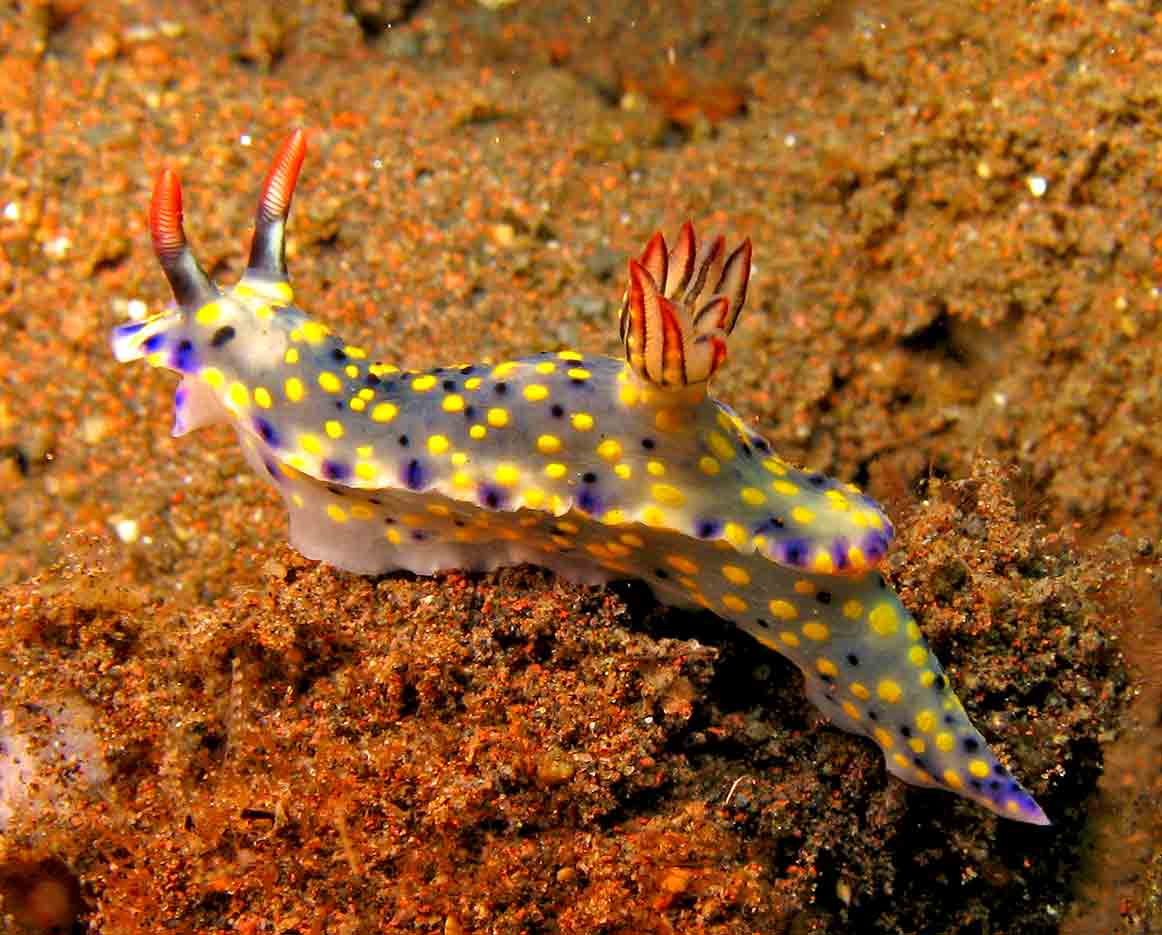 Gili-Trawangan-Lombok-Activities-Activity-Scuba-Scubadive-Scubadiving-Dive-Diving-33.jpg