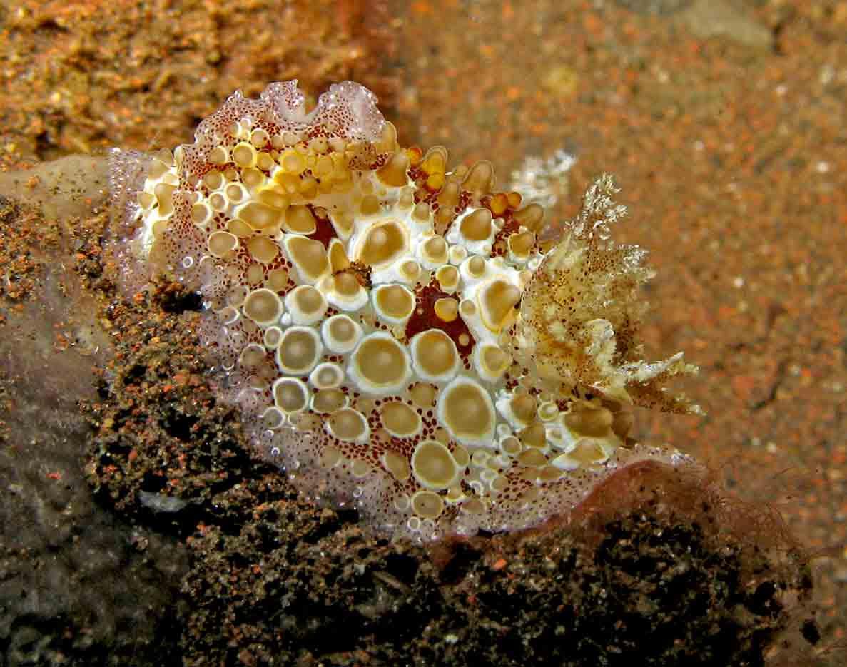 Gili-Trawangan-Lombok-Activities-Activity-Scuba-Scubadive-Scubadiving-Dive-Diving-35.jpg