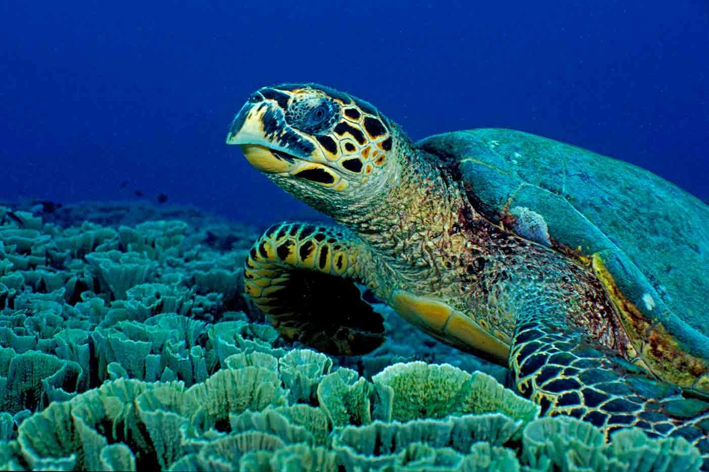 Gili-Trawangan-Lombok-Activities-Activity-Scuba-Scubadive-Scubadiving-Dive-Diving-37.jpg