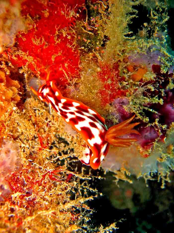 Gili-Trawangan-Lombok-Activities-Activity-Scuba-Scubadive-Scubadiving-Dive-Diving-36.jpg