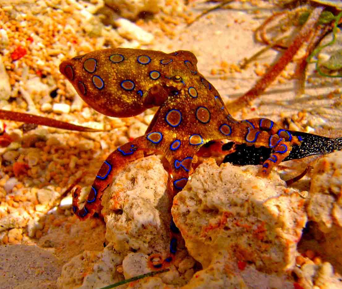 Gili-Trawangan-Lombok-Activities-Activity-Scuba-Scubadive-Scubadiving-Dive-Diving-38.jpg