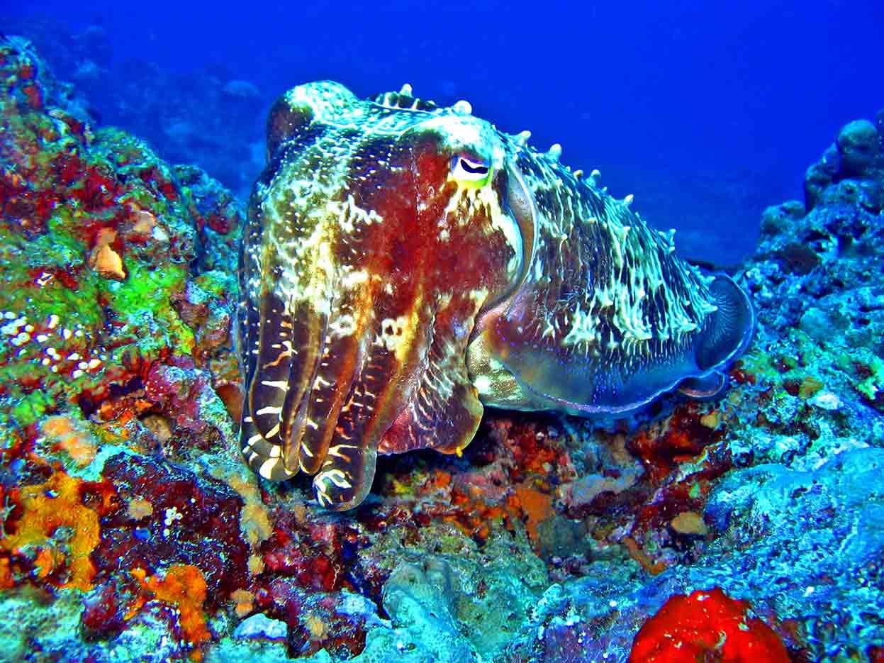 Gili-Trawangan-Lombok-Activities-Activity-Scuba-Scubadive-Scubadiving-Dive-Diving-40.jpg