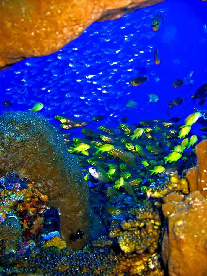 Gili-Trawangan-Lombok-Activities-Activity-Scuba-Scubadive-Scubadiving-Dive-Diving-41.jpg