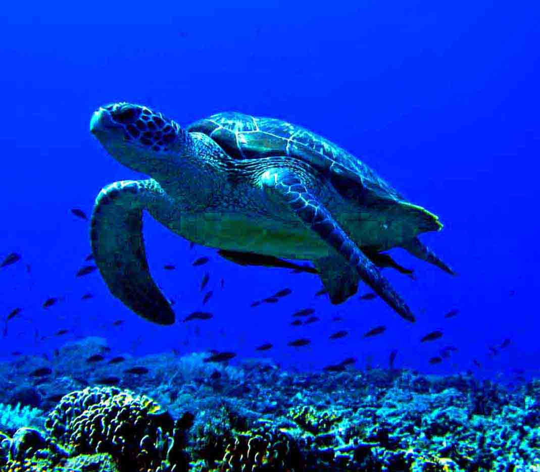 Gili-Trawangan-Lombok-Activities-Activity-Scuba-Scubadive-Scubadiving-Dive-Diving-48.jpg