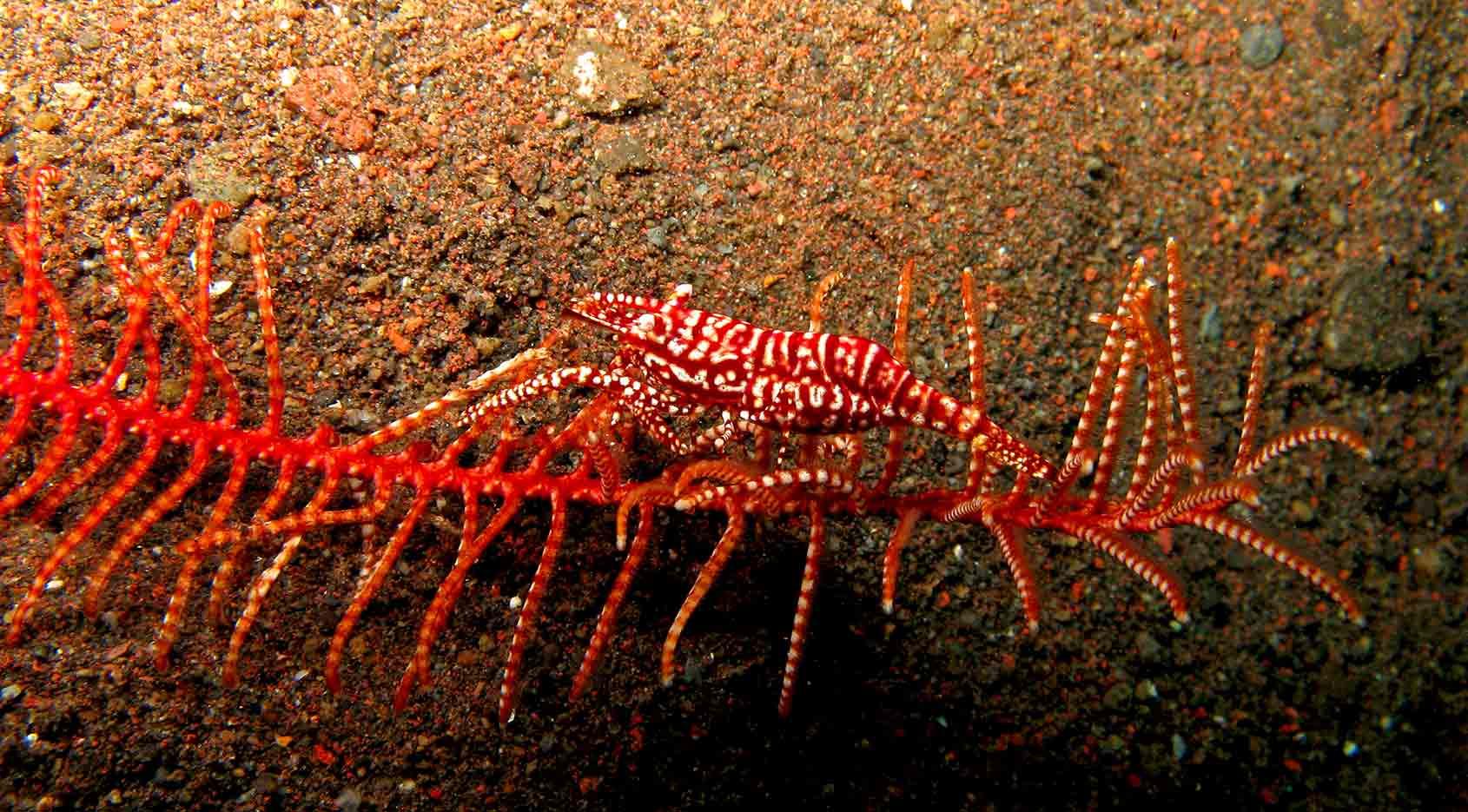 Gili-Trawangan-Lombok-Activities-Activity-Scuba-Scubadive-Scubadiving-Dive-Diving-53.jpg