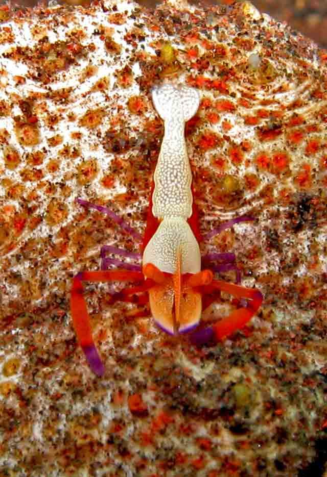 Gili-Trawangan-Lombok-Activities-Activity-Scuba-Scubadive-Scubadiving-Dive-Diving-60.jpg