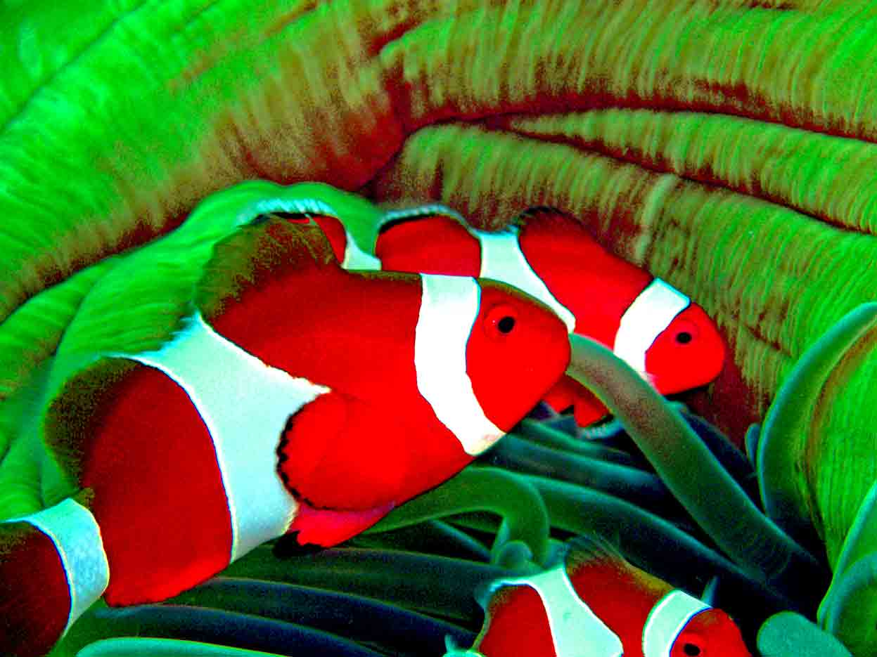 Gili-Trawangan-Lombok-Activities-Activity-Scuba-Scubadive-Scubadiving-Dive-Diving-63.jpg