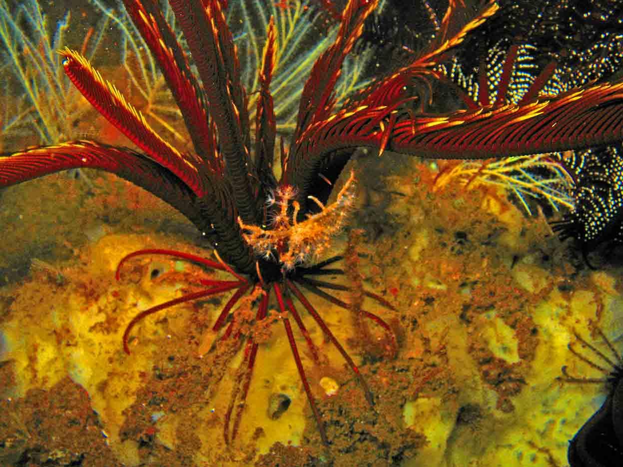 Gili-Trawangan-Lombok-Activities-Activity-Scuba-Scubadive-Scubadiving-Dive-Diving-62.jpg