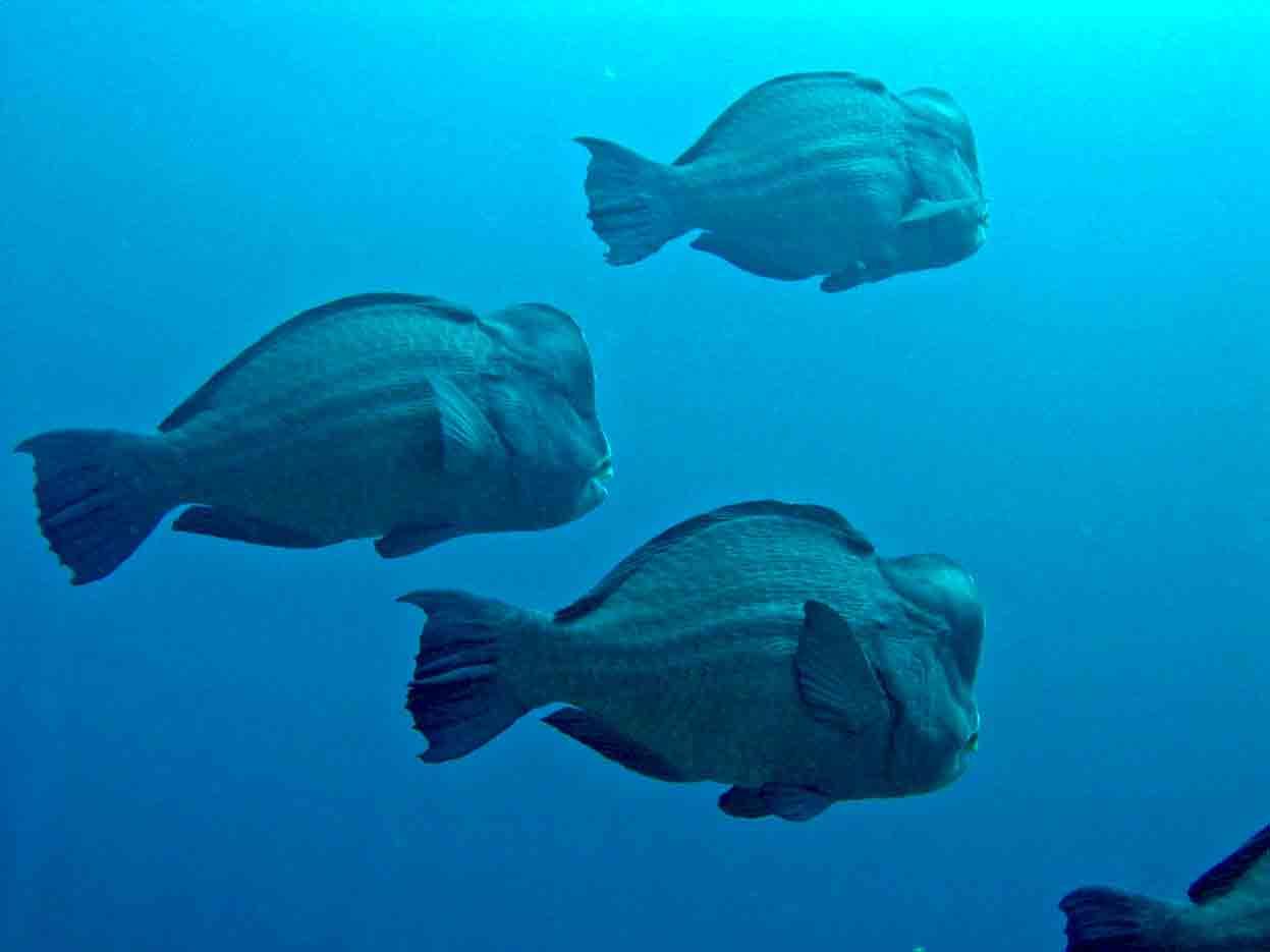 Gili-Trawangan-Lombok-Activities-Activity-Scuba-Scubadive-Scubadiving-Dive-Diving-67.jpg