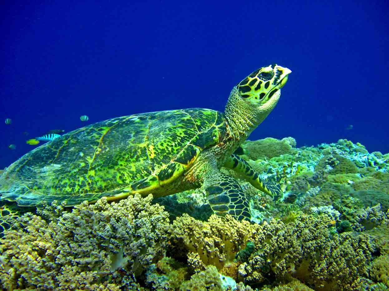 Gili-Trawangan-Lombok-Activities-Activity-Scuba-Scubadive-Scubadiving-Dive-Diving-66.jpg