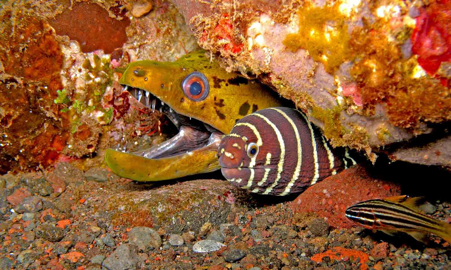Gili-Trawangan-Lombok-Activities-Activity-Scuba-Scubadive-Scubadiving-Dive-Diving-71.jpg