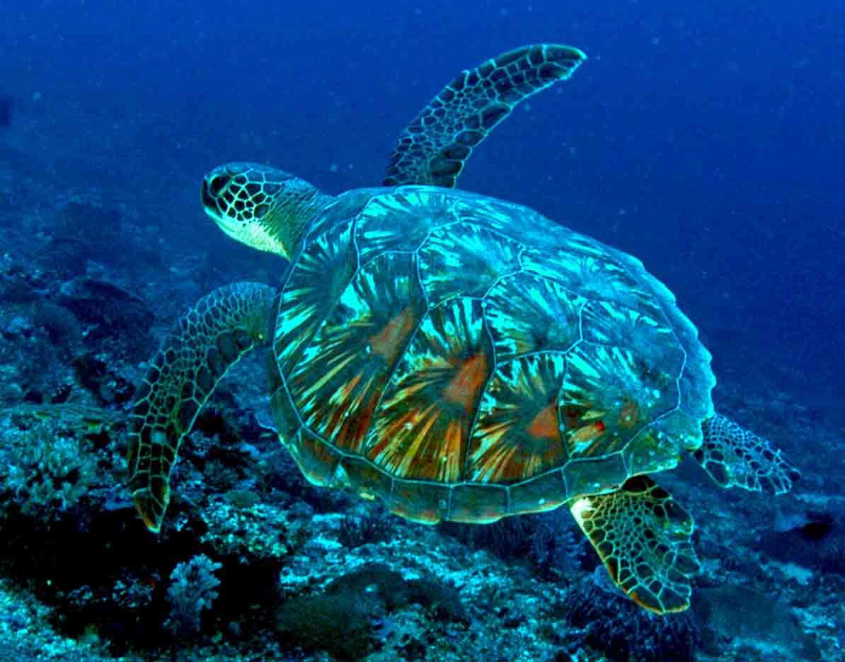 Gili-Trawangan-Lombok-Activities-Activity-Scuba-Scubadive-Scubadiving-Dive-Diving-75.jpg