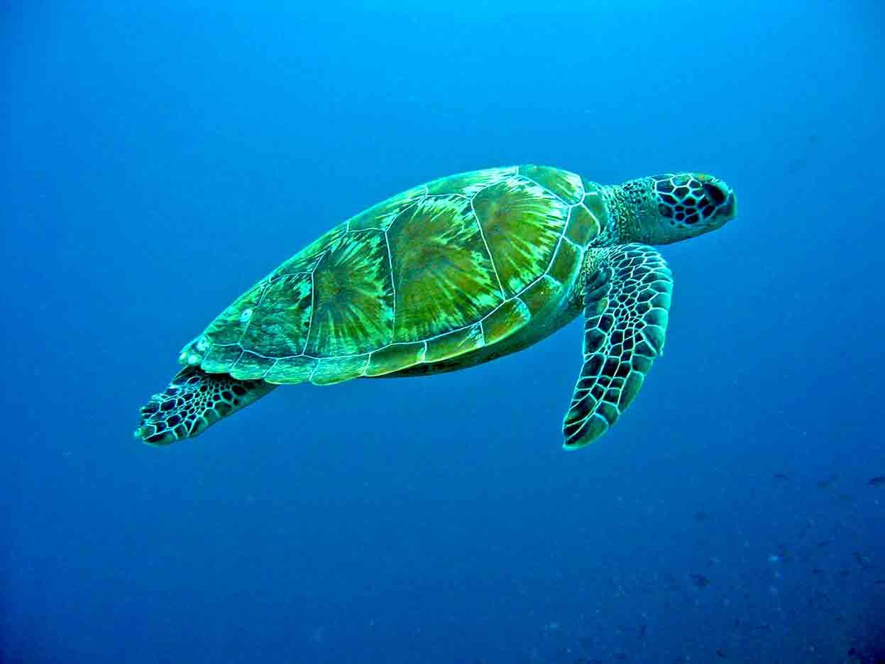 Gili-Trawangan-Lombok-Activities-Activity-Scuba-Scubadive-Scubadiving-Dive-Diving-77.jpg