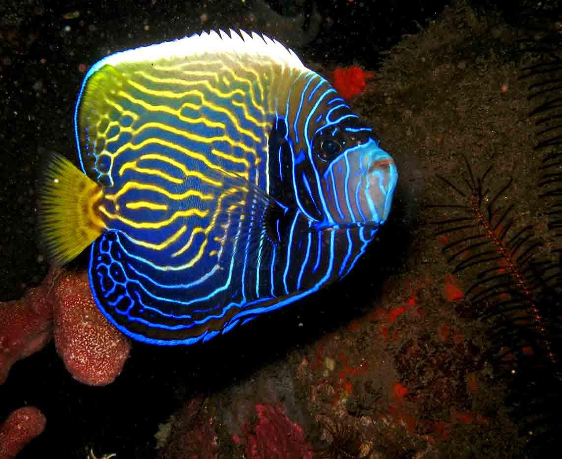 Gili-Trawangan-Lombok-Activities-Activity-Scuba-Scubadive-Scubadiving-Dive-Diving-76.jpg