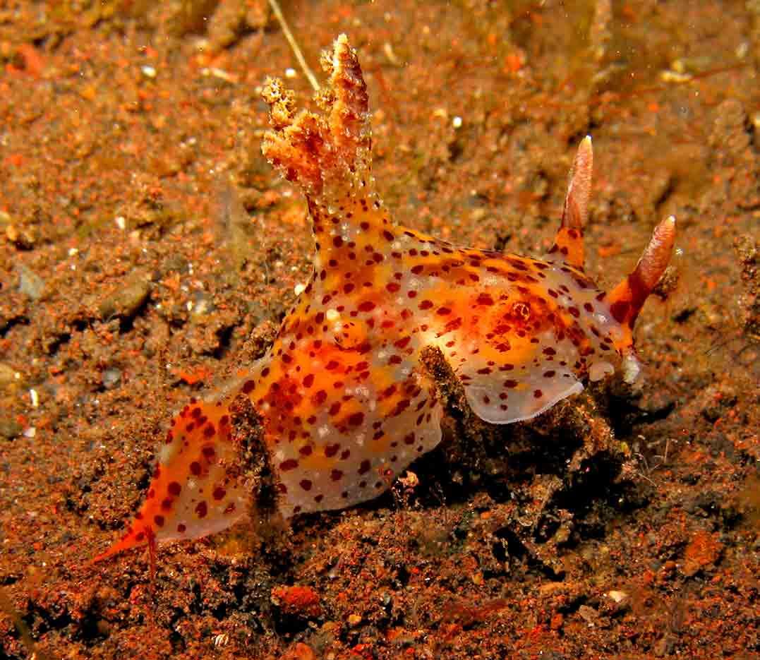 Gili-Trawangan-Lombok-Activities-Activity-Scuba-Scubadive-Scubadiving-Dive-Diving-78.jpg