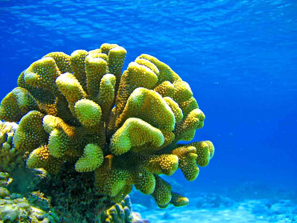 Gili-Trawangan-Lombok-Activities-Activity-Scuba-Scubadive-Scubadiving-Dive-Diving-82.jpg