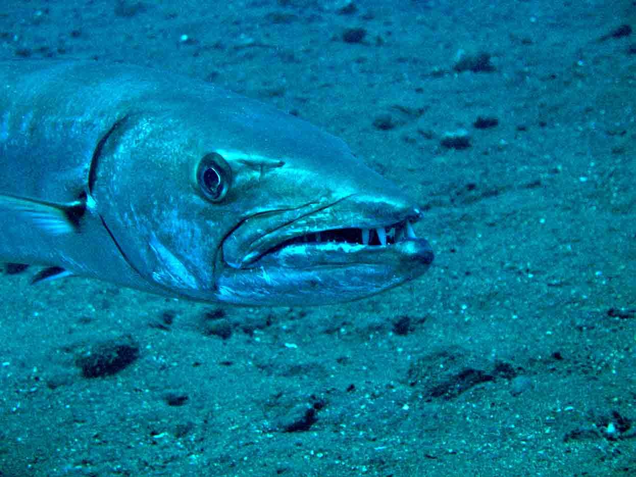 Gili-Trawangan-Lombok-Activities-Activity-Scuba-Scubadive-Scubadiving-Dive-Diving-81.jpg
