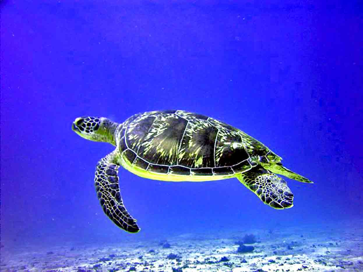 Gili-Trawangan-Lombok-Activities-Activity-Scuba-Scubadive-Scubadiving-Dive-Diving-83.jpg