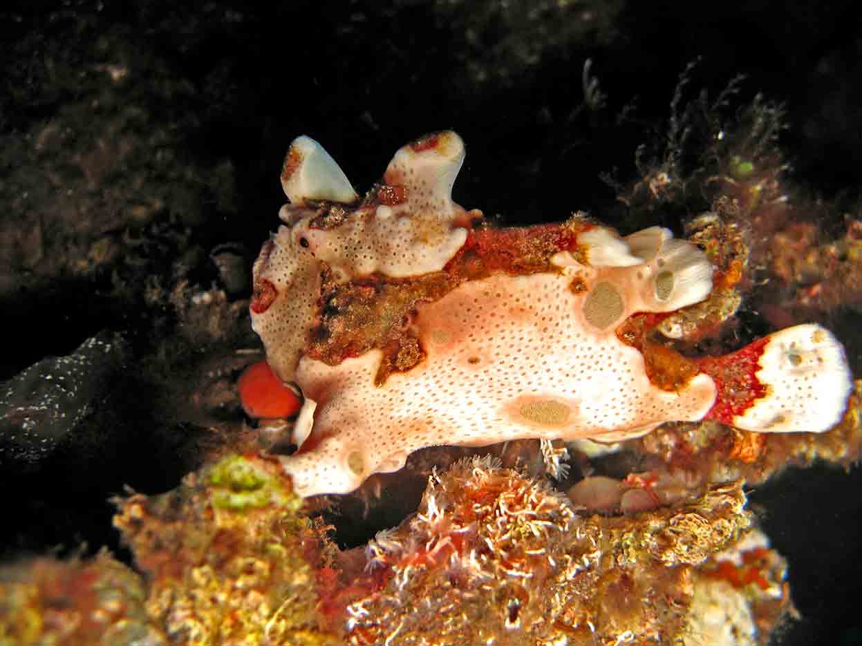 Gili-Trawangan-Lombok-Activities-Activity-Scuba-Scubadive-Scubadiving-Dive-Diving-85.jpg