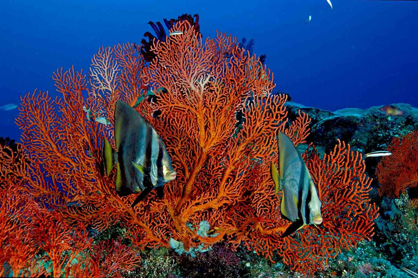 Gili-Trawangan-Lombok-Activities-Activity-Scuba-Scubadive-Scubadiving-Dive-Diving-84.jpg