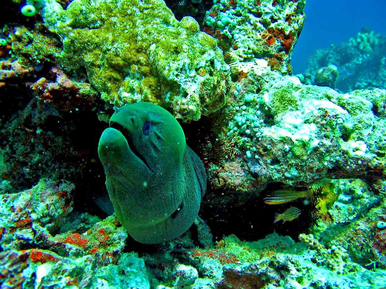 Gili-Trawangan-Lombok-Activities-Activity-Scuba-Scubadive-Scubadiving-Dive-Diving-86.jpg