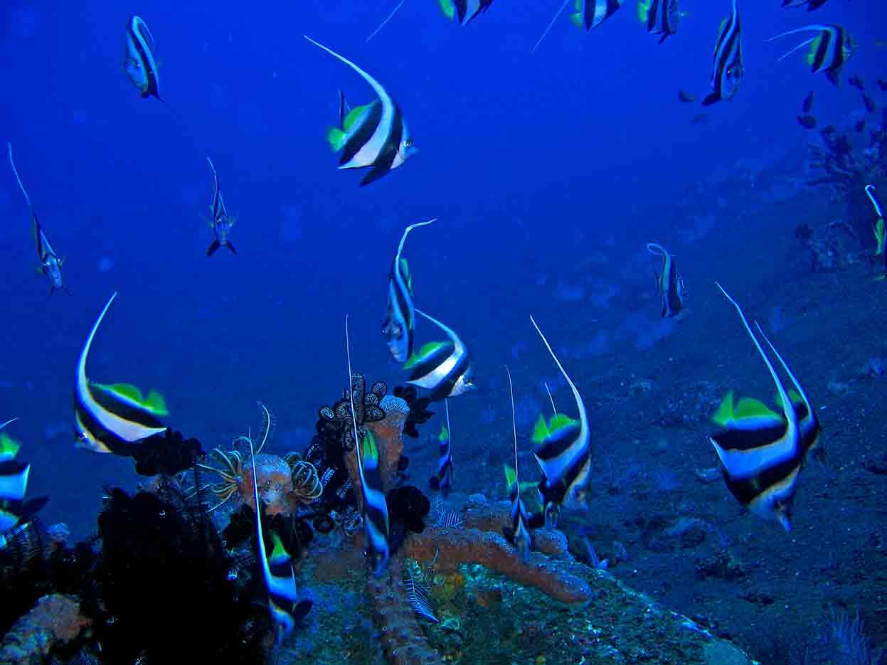 Gili-Trawangan-Lombok-Activities-Activity-Scuba-Scubadive-Scubadiving-Dive-Diving-87.jpg