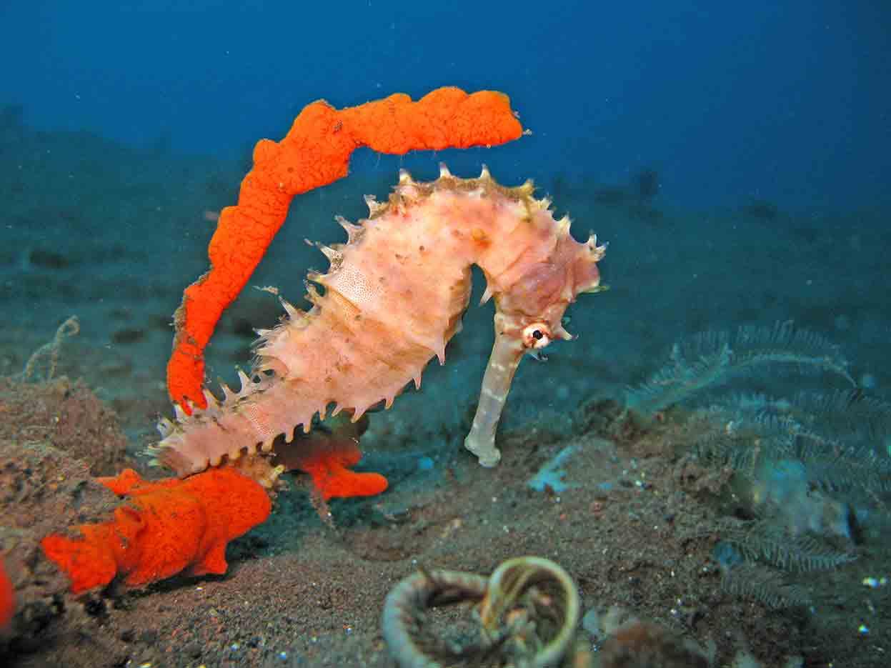 Gili-Trawangan-Lombok-Activities-Activity-Scuba-Scubadive-Scubadiving-Dive-Diving-89.jpg