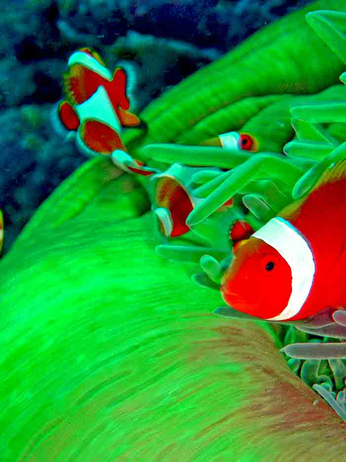 Gili-Trawangan-Lombok-Activities-Activity-Scuba-Scubadive-Scubadiving-Dive-Diving-91.jpg