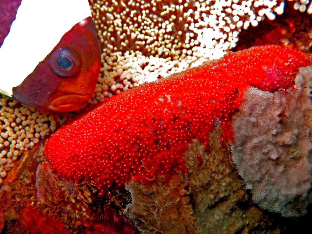 Gili-Trawangan-Lombok-Activities-Activity-Scuba-Scubadive-Scubadiving-Dive-Diving-90.jpg