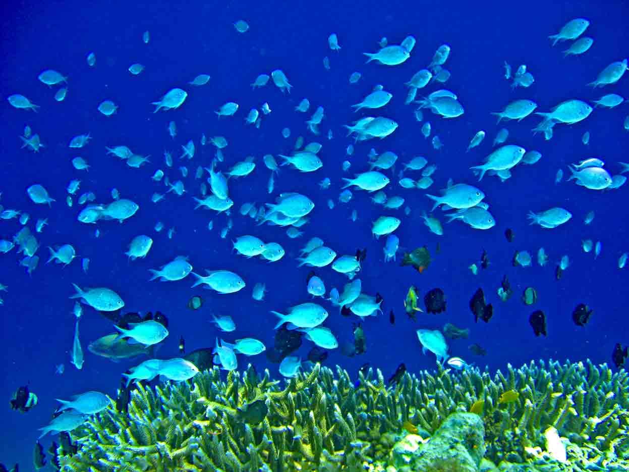 Gili-Trawangan-Lombok-Activities-Activity-Scuba-Scubadive-Scubadiving-Dive-Diving-92.jpg