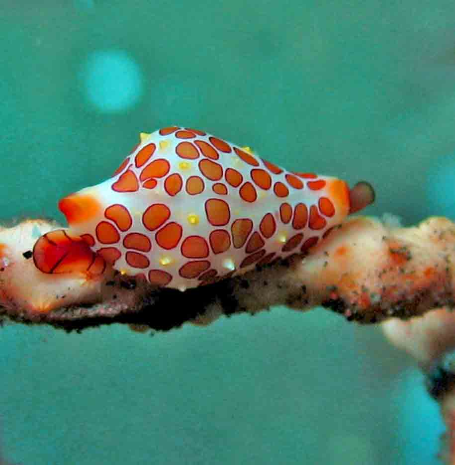 Gili-Trawangan-Lombok-Activities-Activity-Scuba-Scubadive-Scubadiving-Dive-Diving-93.jpg